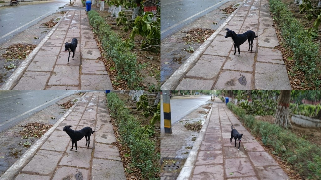 PUSA IARI Campus - Cute Little Doggy